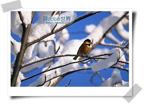 菜鸟也能当PS高手!PhotoWorks为你的图片添加漂亮的边框(教程+下载)