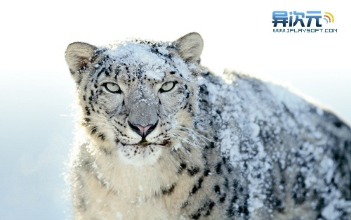 Mac OSX Snow Leopard 官方壁纸